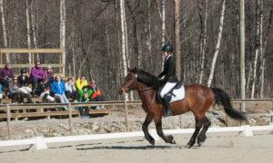 Dressurstevne ved Narvik Rideskole, 30. april og 1. mai 2016.